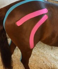 Physiotherapeutin für Tiere Gladbeck